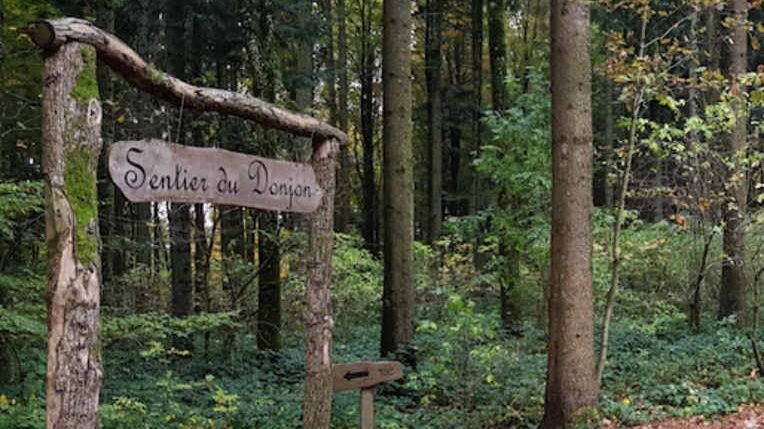 Une forêt pleine de surprises